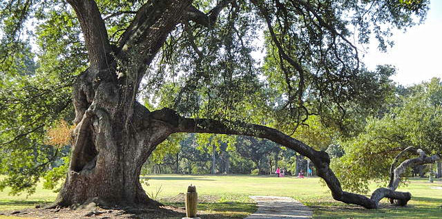 The Oaks of New Orleans
